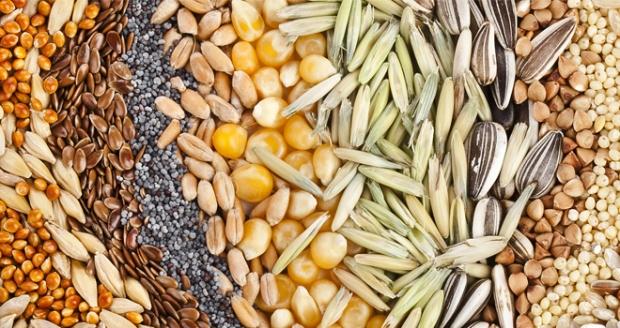 por-que-incluir-semillas-en-tu-alimentacion